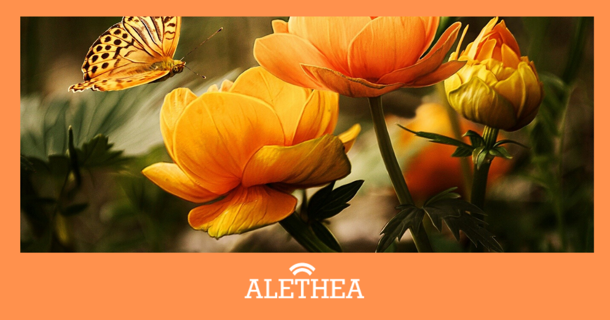 FREE Support Available For Alethea Users During Covid-19